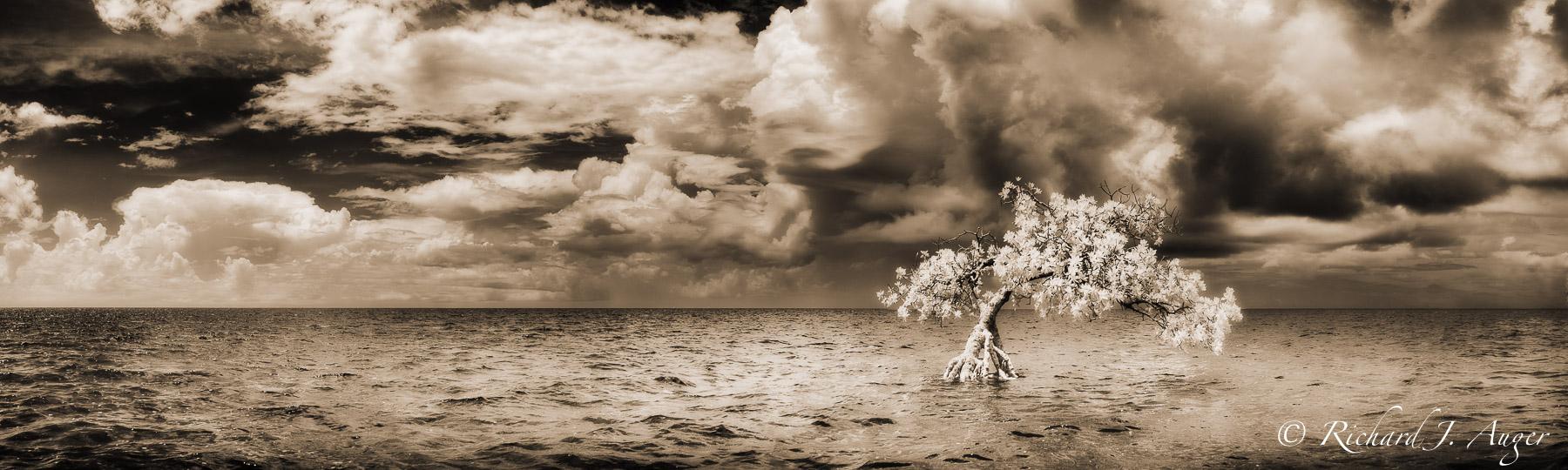 Long Mangrove State Park, Florida Keys, Storm, Moody, Sepia, Monochrome, light, photograph, photographer, water, landscape, sepia tone, black and white, panorama