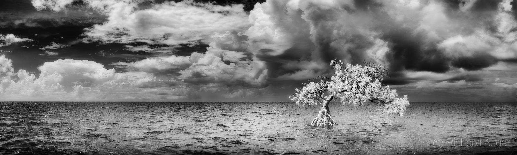 Long Mangrove State Park, Florida Keys, Storm, Moody, Sepia, Monochrome, light, photograph, photographer, water, landscape, black and white, panorama