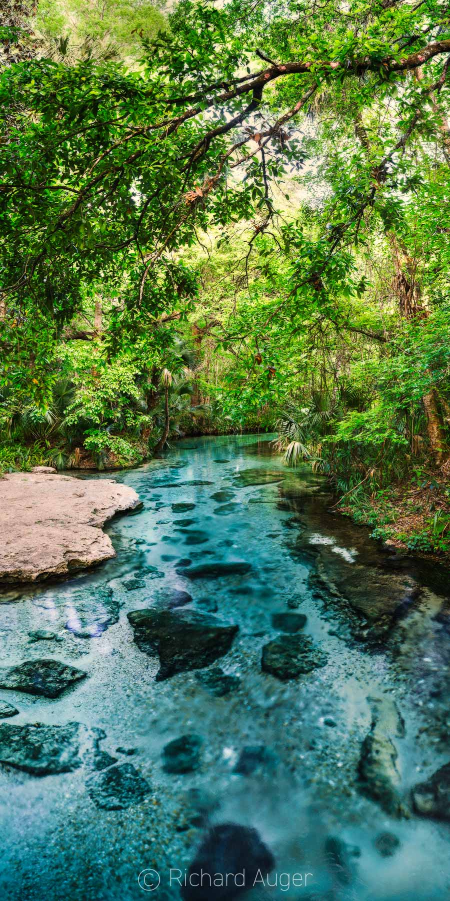 Kelly Park, Rock Springs Run, Apopka, Orlando, Florida, Tropical, Clear Water, Vertical Panorama