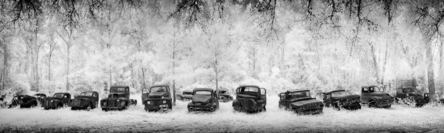 Rusted Vintage Ford Trucks Cars, Florida, Forest, haunted, photograph