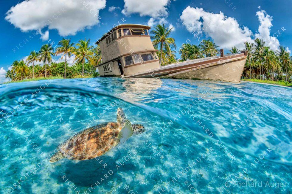 Shipwreck, Peanut Island, West Palm Beach, Sea Turtle, Palm Trees, Underwater