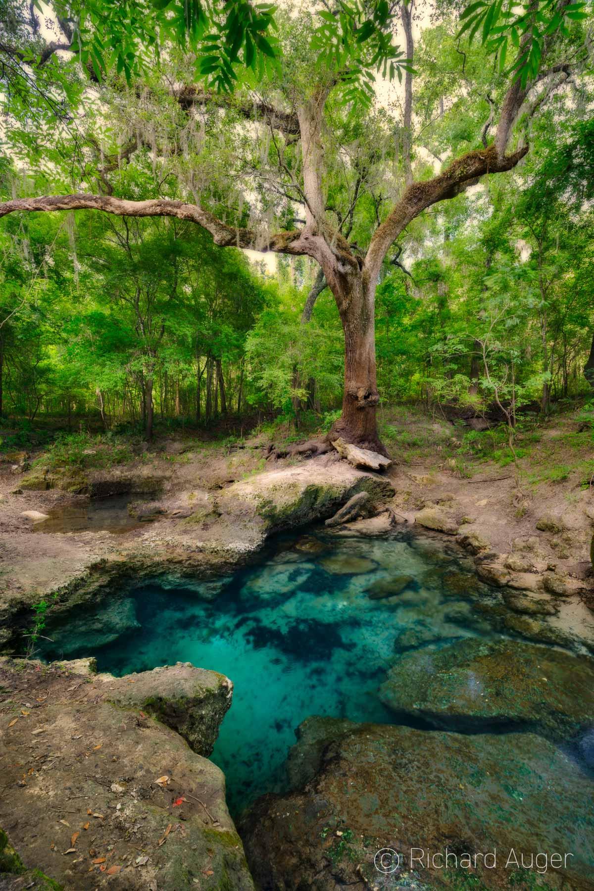 Secret Spring, Wild Florida, Oak Tree, Forest, River, Clear Water