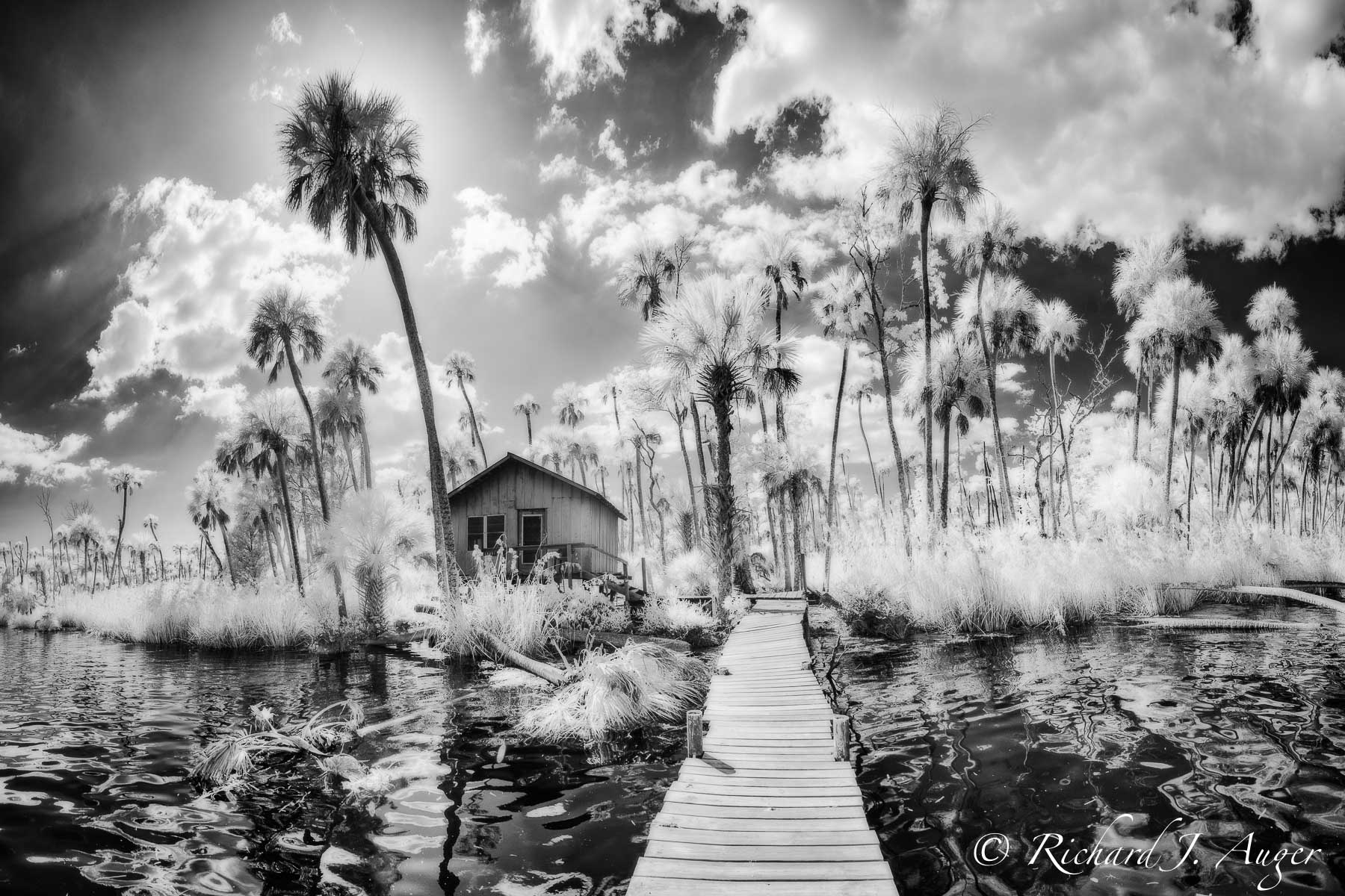 Chassahowitzka River, Chaz, Florida, Swamp, Palm Trees, Fishing Shack, Stormy, Black and White, Monochrome, Photograph, Photo, Nature, Landscape, Richard Auger