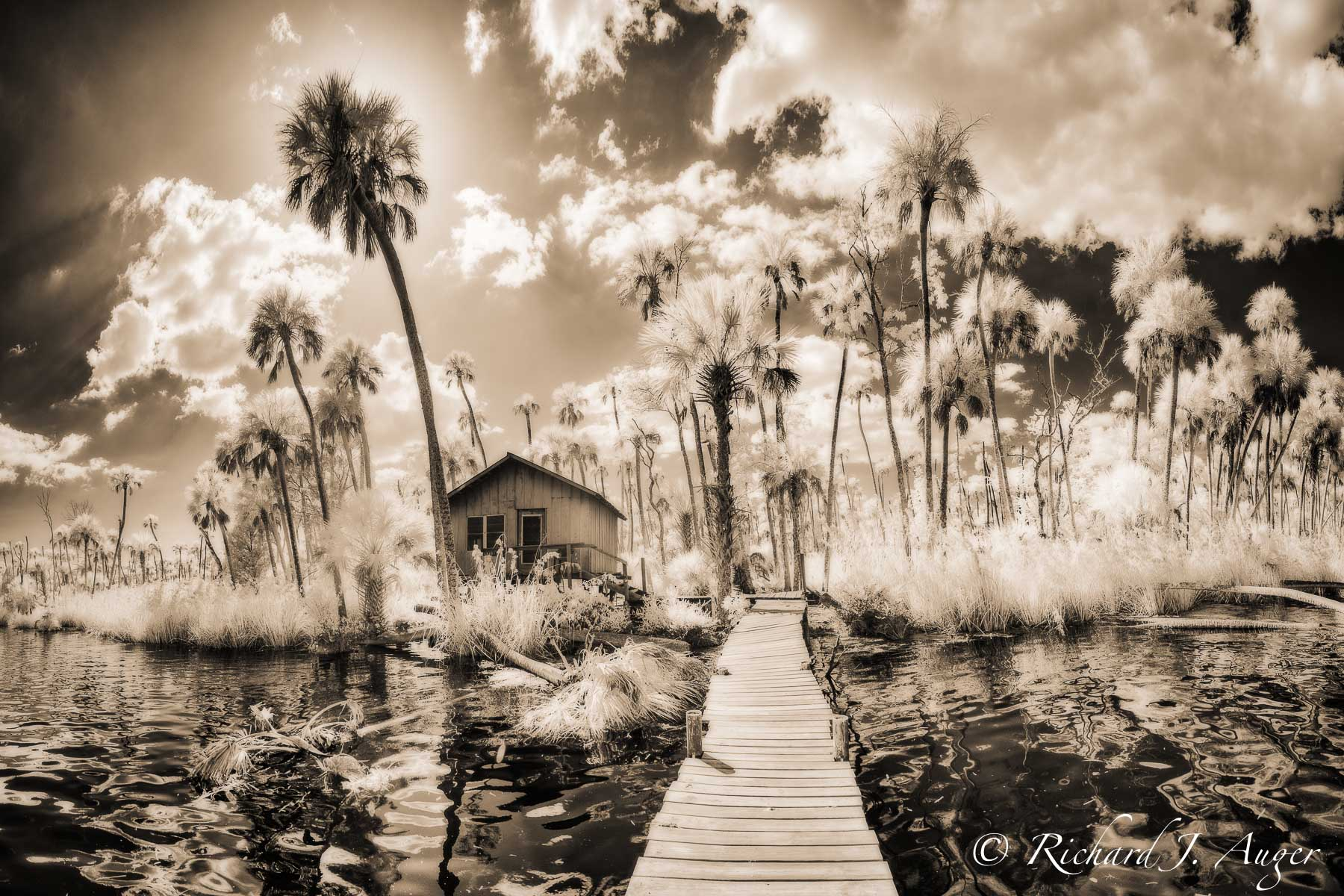 Chassahowitzka River, Florida, Shack, Walkway, Palm Trees, Water, Coastal, Swamp, Kayaking, Landscape, Photographer, Infrared, Backlit, sepia tone, monochrome