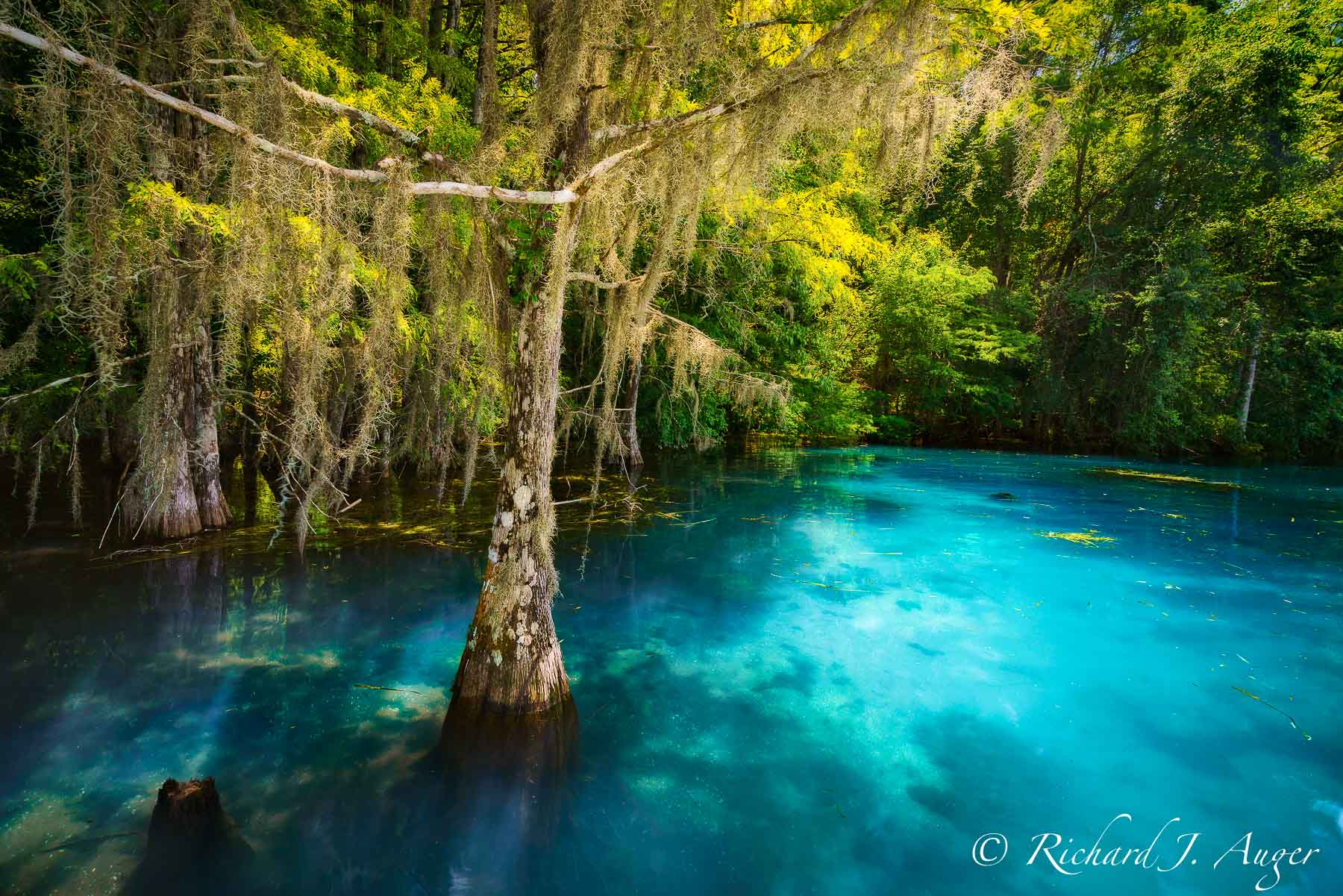 Shangri-La Spring, Florida, Cypress, Blue, Clear, Water, Photograph, Landscape, Sunshine