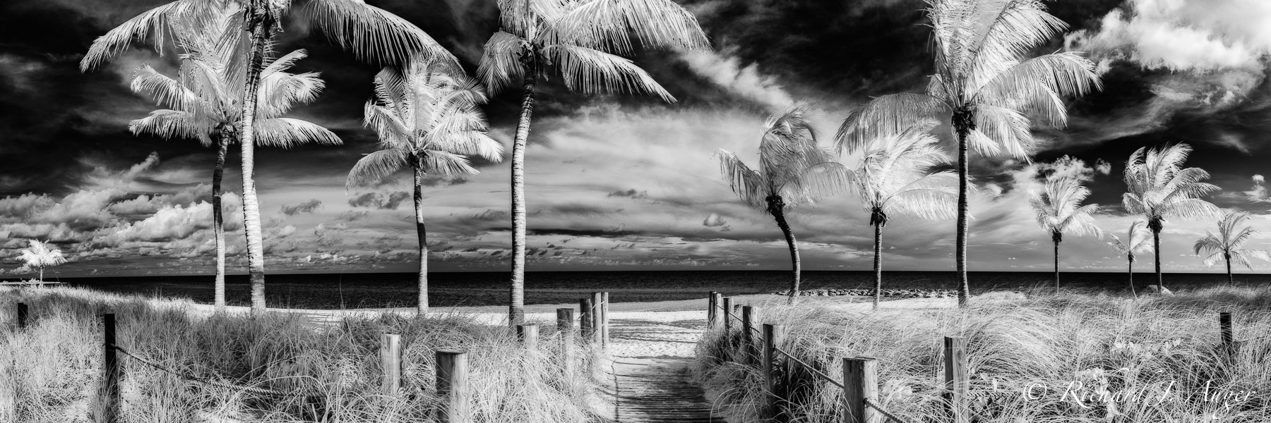 Smathers Beach, Key West, Florida, Palm Trees, Monochrome, Black and White, Beach, Ocean, Paradise, Photograph, Landscape