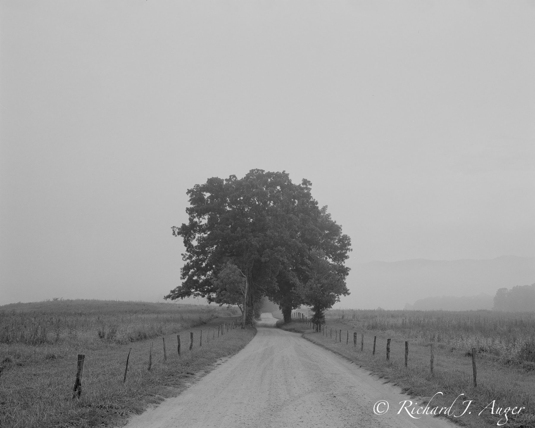 Smoky Mountains, Scenic Road, Black and White, Photograph, fog
