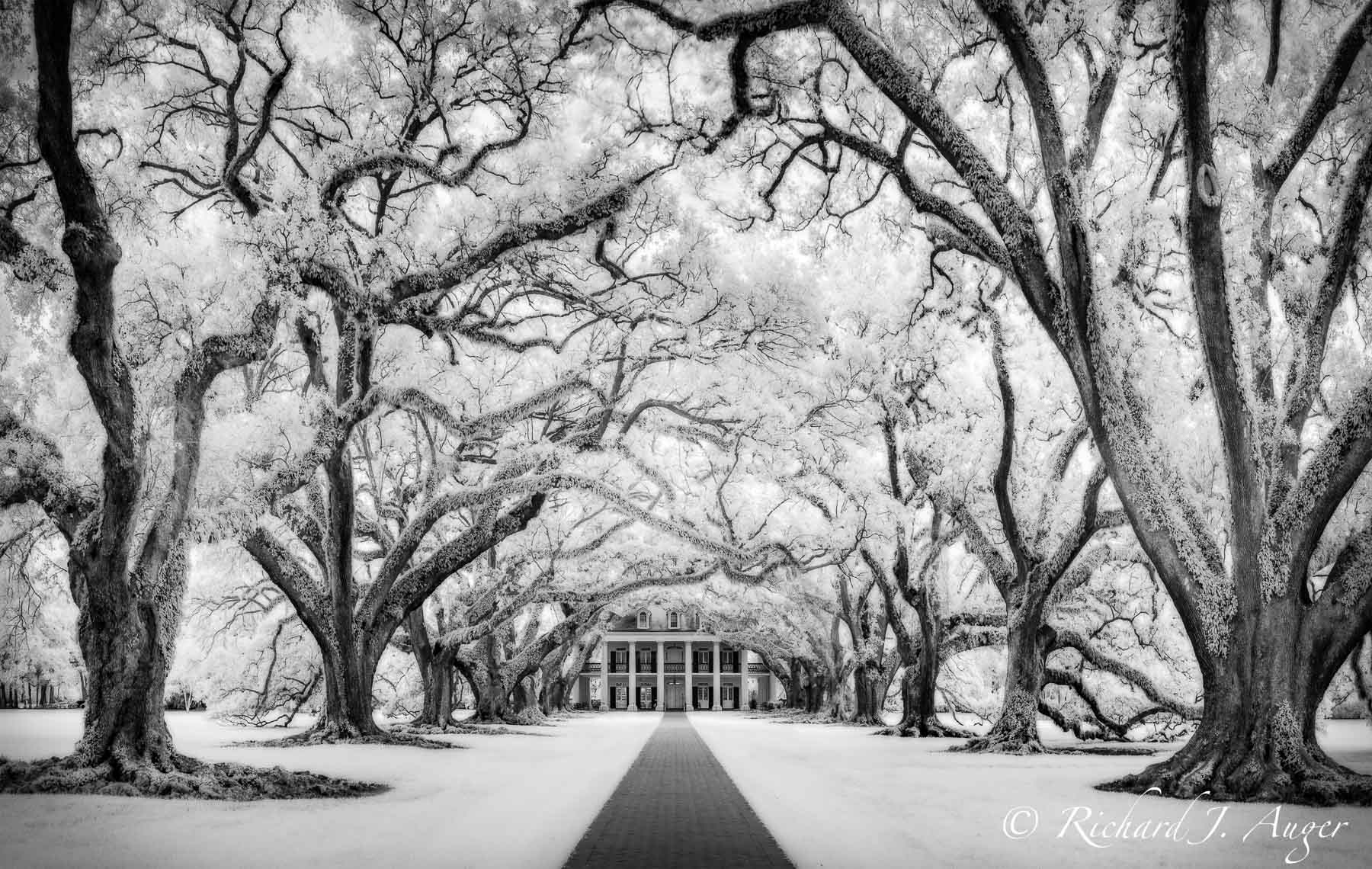 Oak Alley Plantation, Louisiana, Oak Trees, Mansion, Haunted, New Orleans, black and white, photograph
