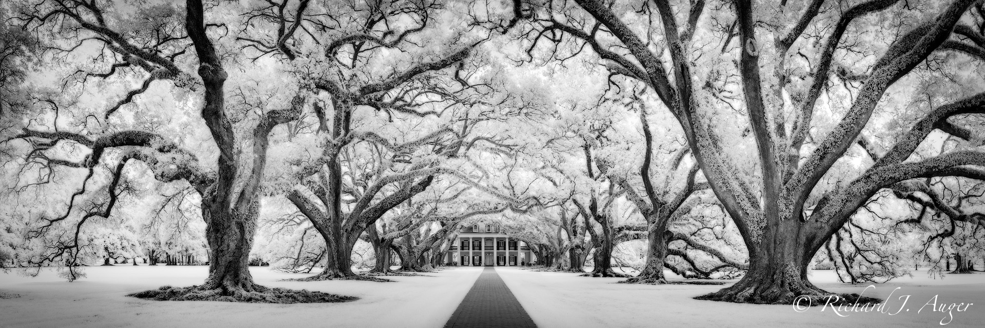 Oak Alley Plantation, Louisiana, Panorama, Oak Trees, Mansion, Haunted, New Orleans, black and white, photograph