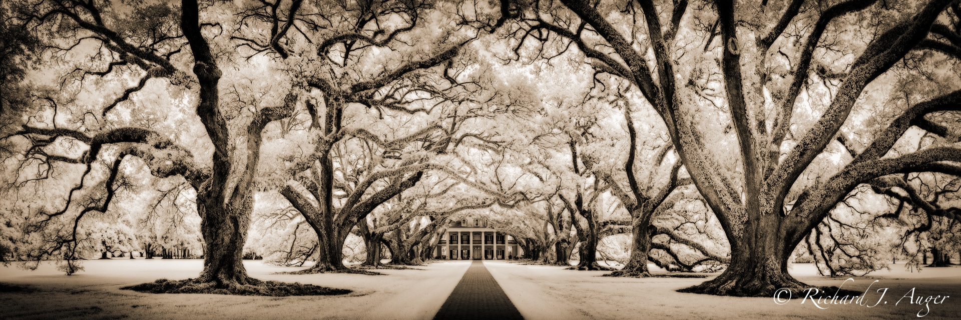 Oak Alley Plantation, Louisiana, Oak Trees, Mansion, Haunted, New Orleans, sepia tone, black and white, panorama, photograph