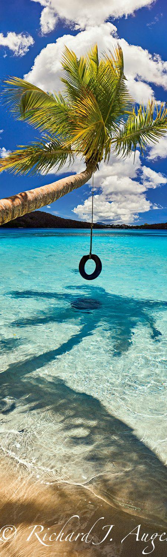 St John, Oppenheimer Beach, US Virgin Islands, Palm Tree, Vertical Panorama, Photograph, Water, Ocean, Blues, Sand