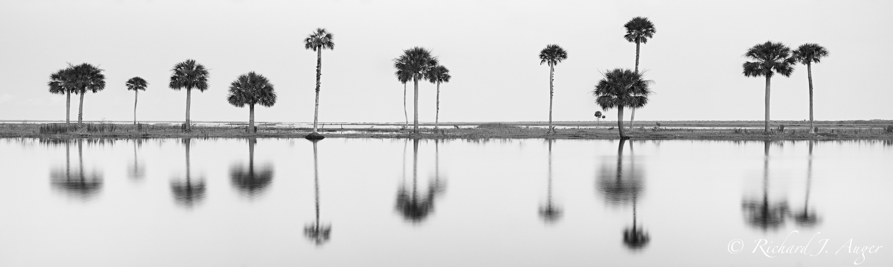 St Johns River, Econlockhatchee, Palm Trees, Abstract, Photograph, Landscape, Black and White