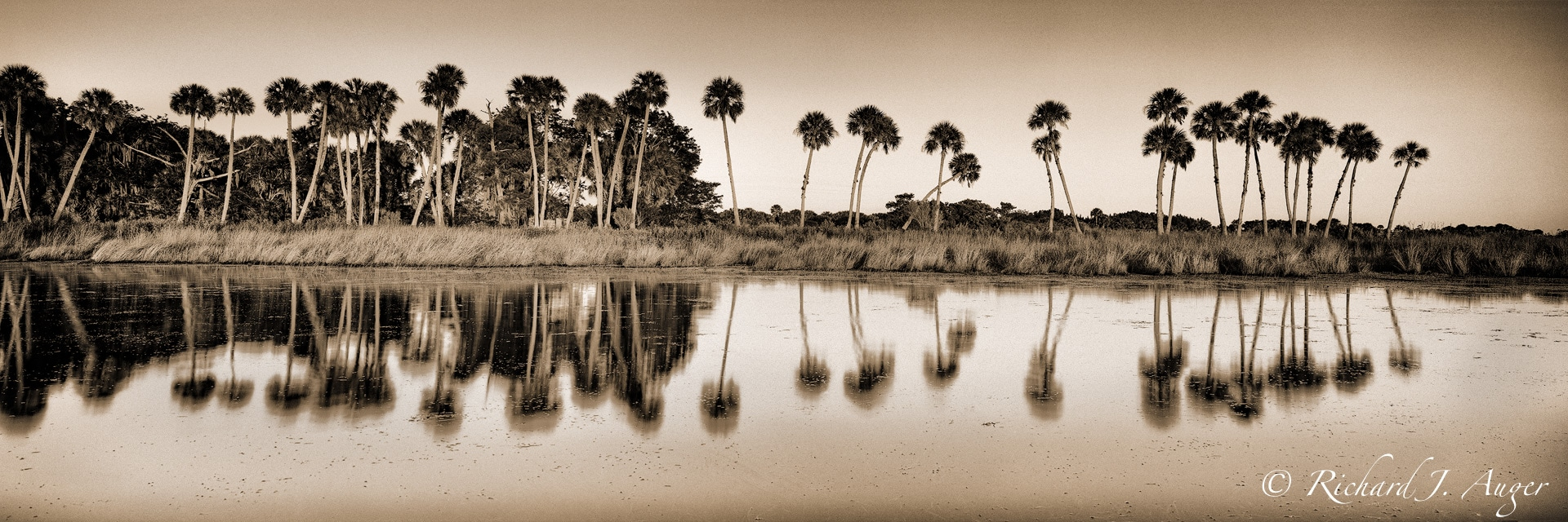 St Johns River, Palm Trees, Reflections, Water, Swamp, vintage, photograph, photographer, landscape, sepia tone, black and white, panorama