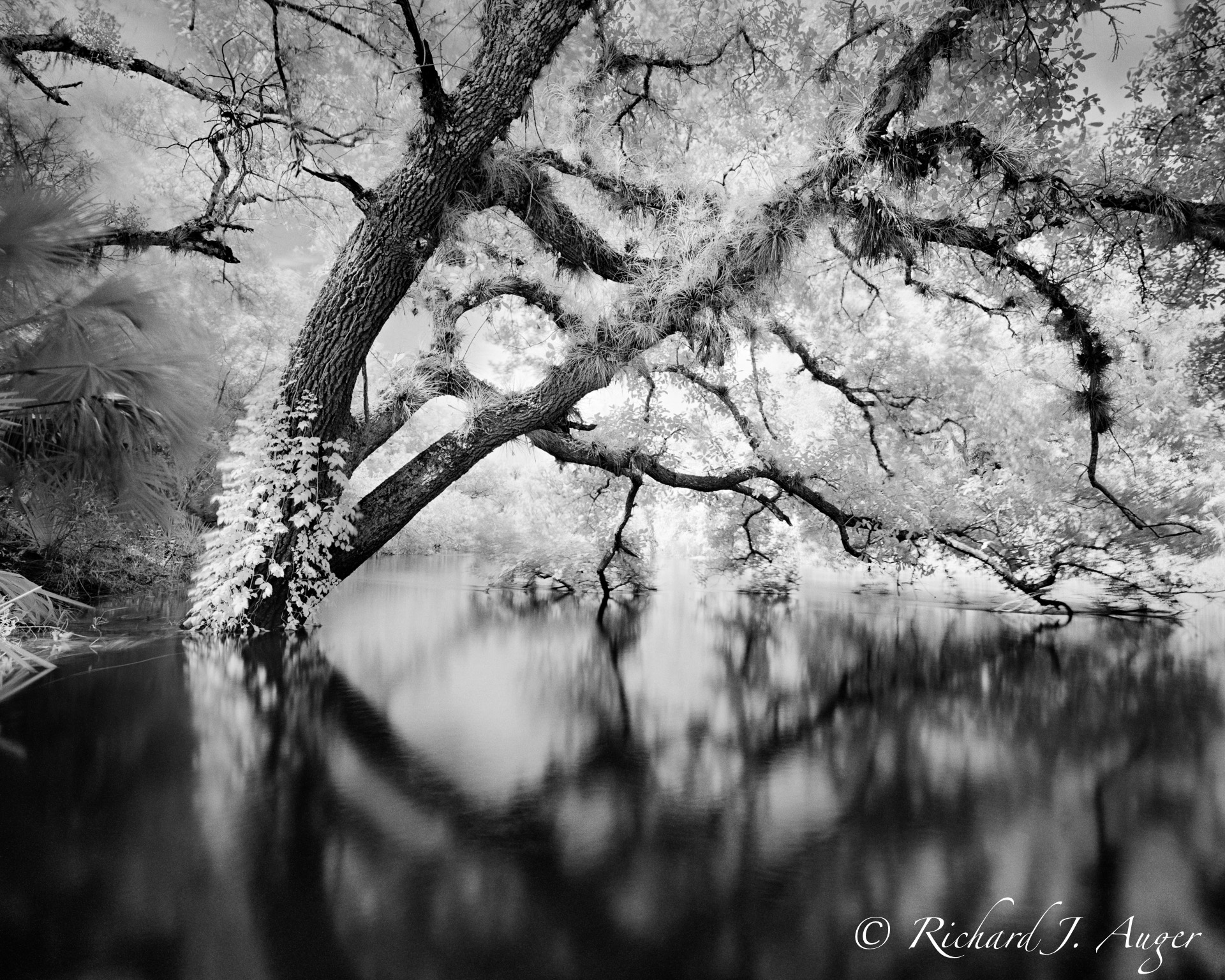 St Johns River, Florida, Black and White, Landcape, Nature, Reflections, Infrared