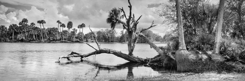 St Johns River, Florida, Orlando, Palm Trees, Swamp, Long Exposure