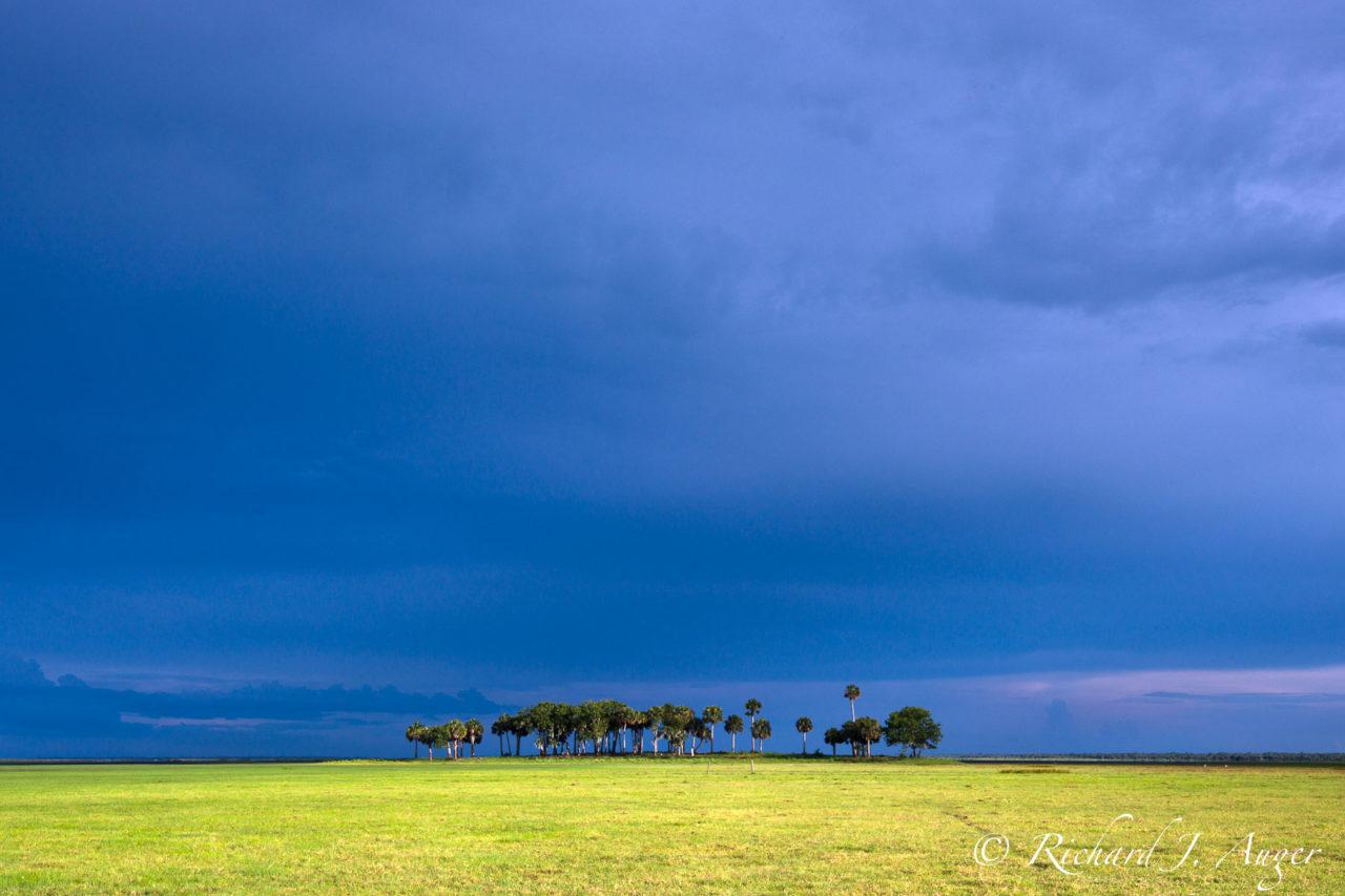 St Johns River, Florida, Floodplain, Palm Trees, Conceptual, Photo