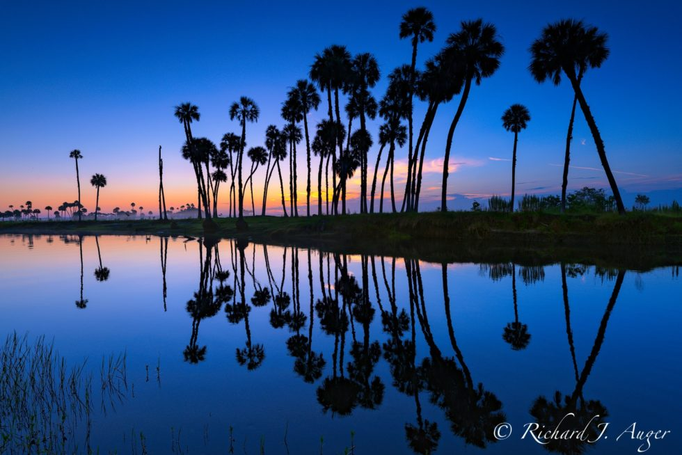 St Johns River, Florida, Reflections, Palm Trees, Swamp, Water, Sunrise, Blues, Nature