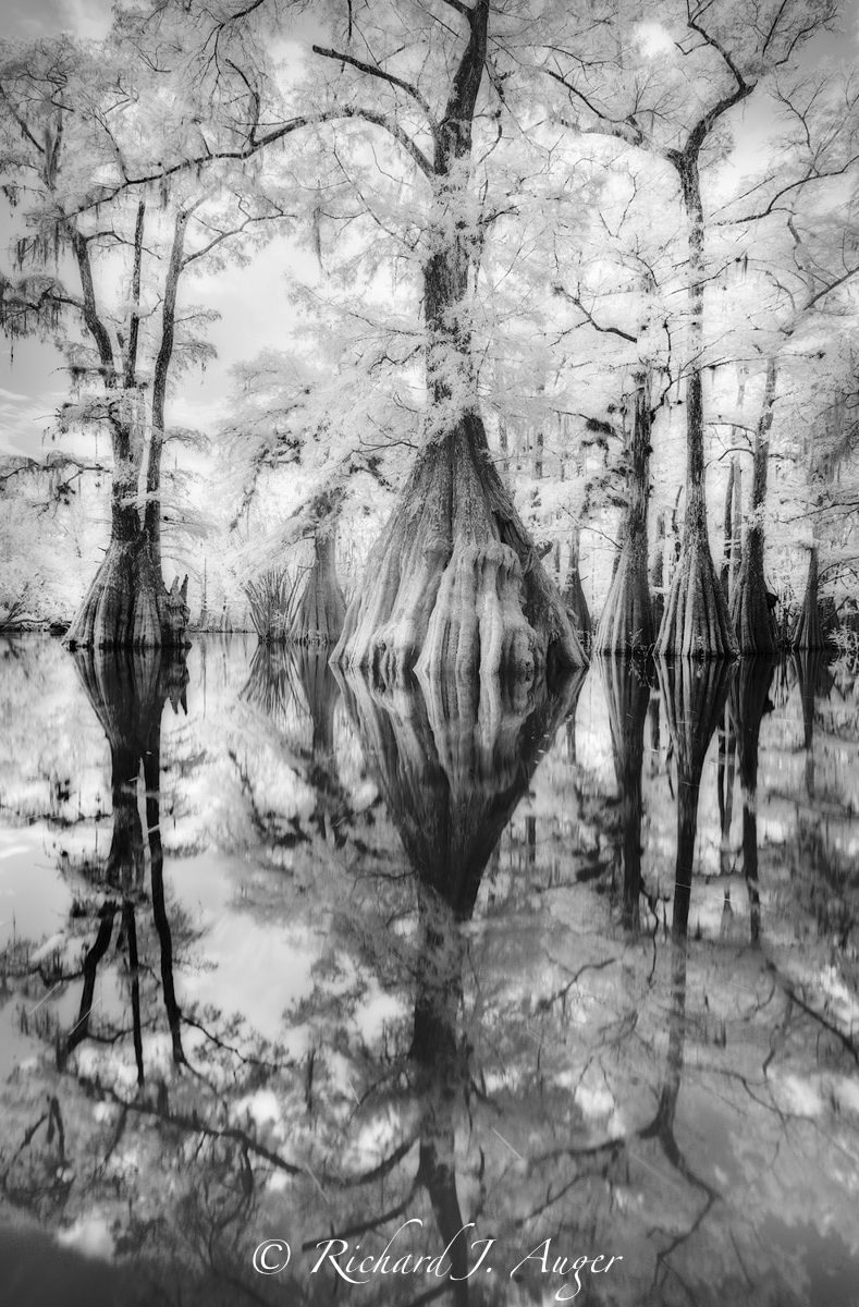 Suwannee River, Santa Fe River, Florida, Nature, Cypress, Black and White, Panhandle, Photo, Photographer