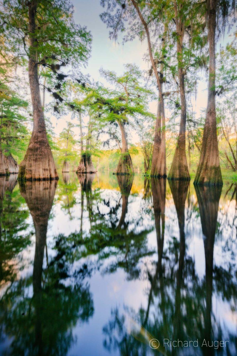 Santa Fe River, Suwannee River, Cypress, Florida, Evening, water, photographer, richard auger, nature, landscape
