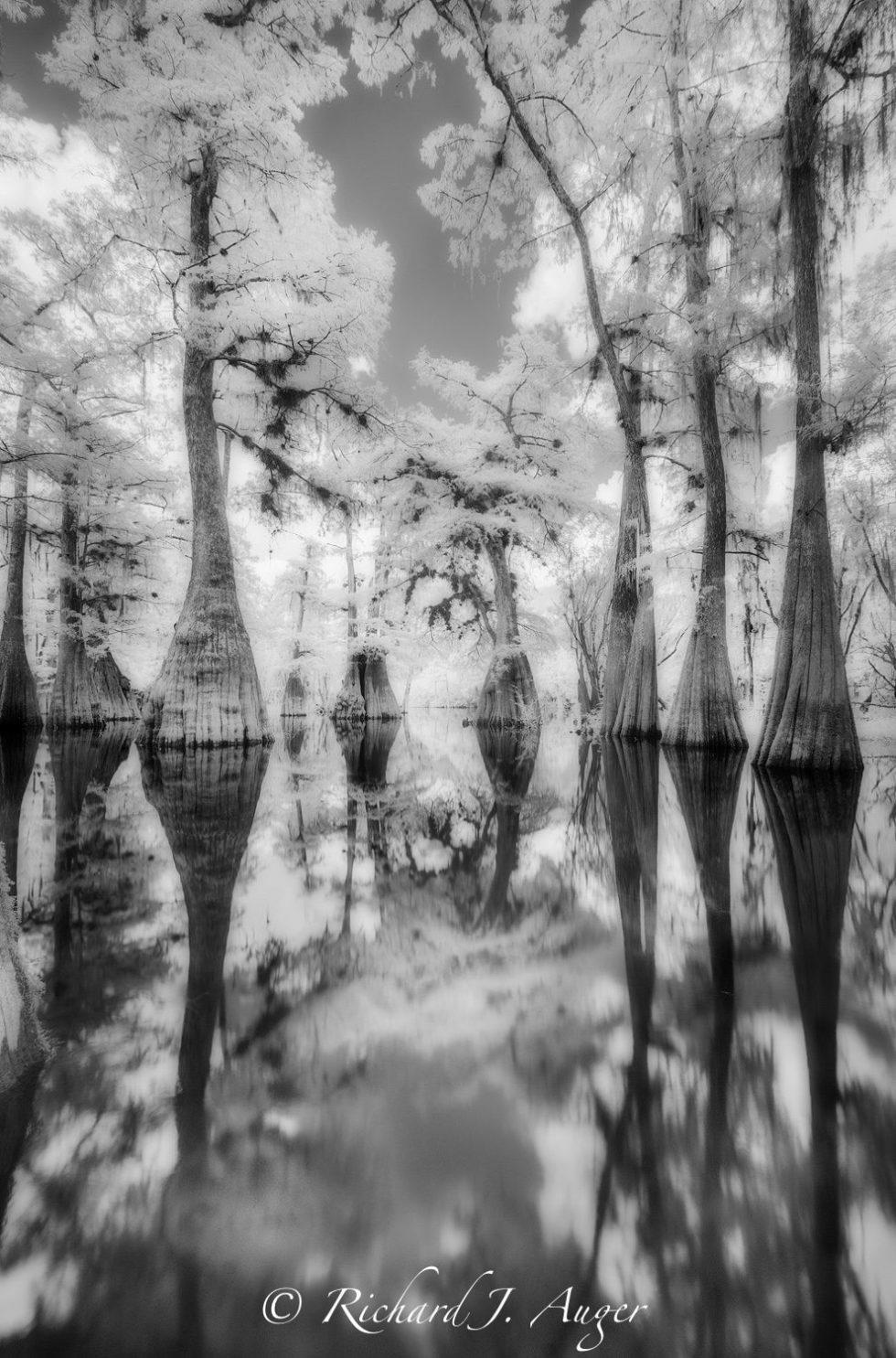 Suwannee River, Santa Fe River, Florida, Nature, Cypress, Black and White, Panhandle, Photo, Photographer