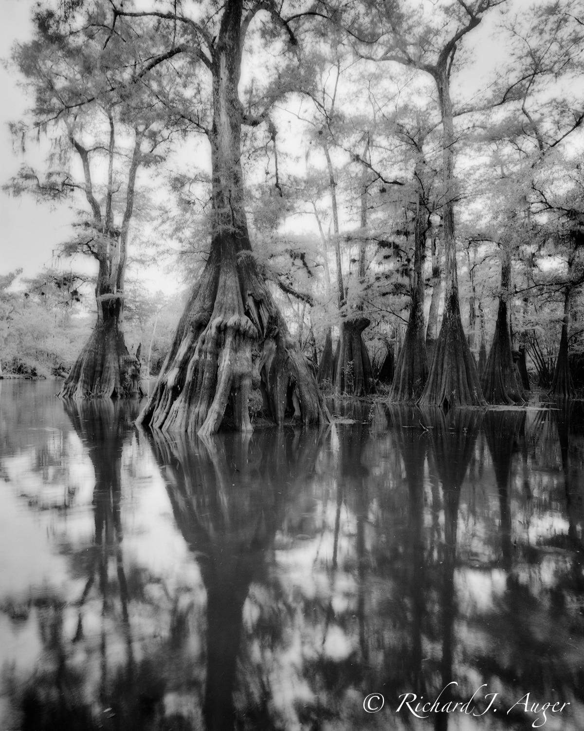 Suwannee River, Florida, Cypress, Water, Swamp, Black and White, Monochrom, Landscape, Photograph, Photogapher, Photo, Nature