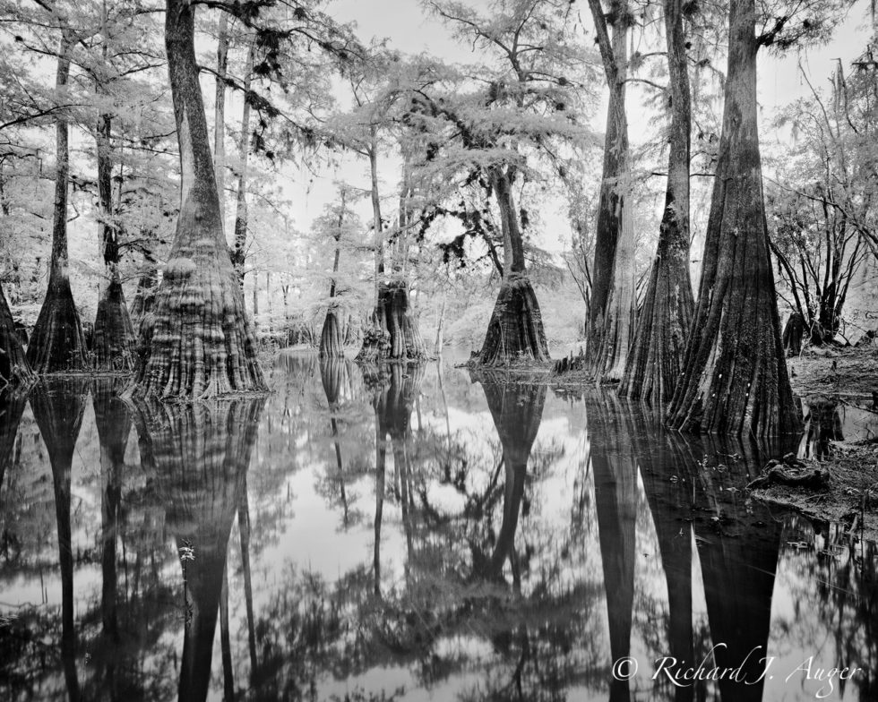 Suwannee River, Florida, Cypress, Swamp, Reflections, nature, water, photograph, black and white