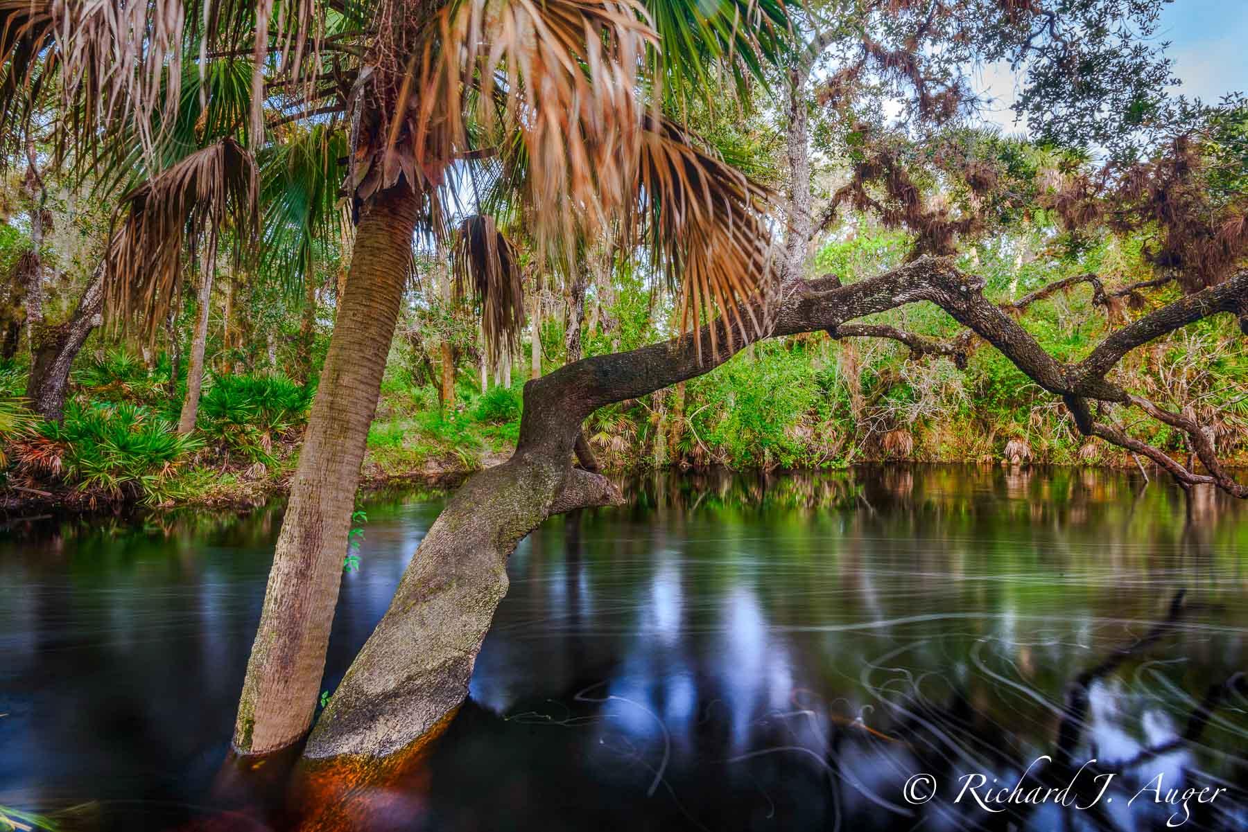 Telegraph Creek, Florida, Swamp, Blackwater, Lee County