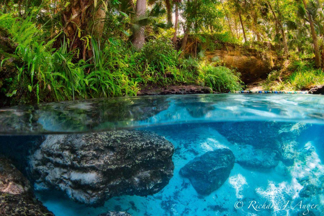 Kelly Park, Rock Springs Run, Apopka, Orlando, Florida, Underwater, Under Over, Split Photograph, Caves, Sand, Photograph