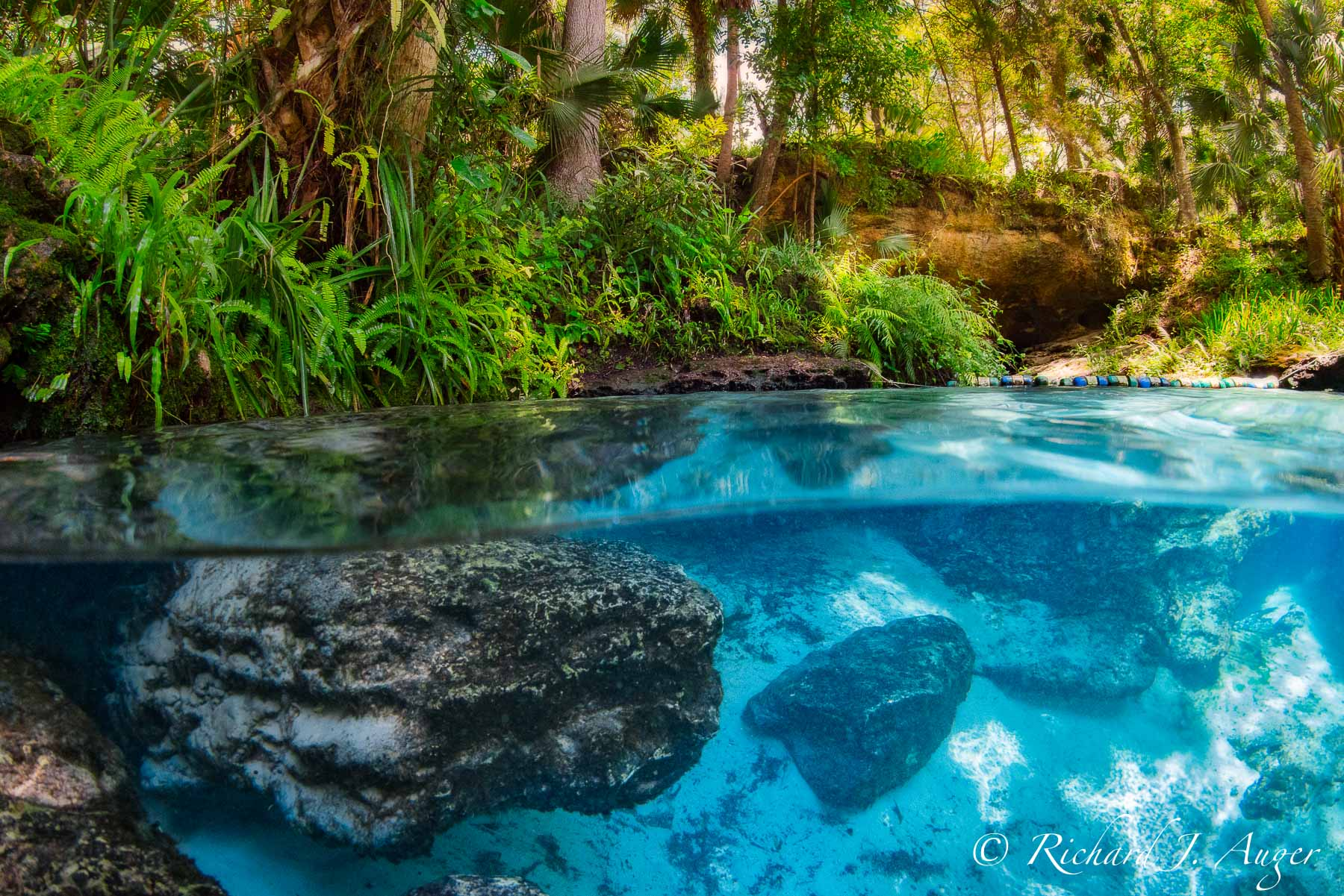 Kelly Park, Rock Springs Run, Apopka, Orlando, Florida, Underwater, Under Over, Split Photograph, Caves, Sand, Photograph