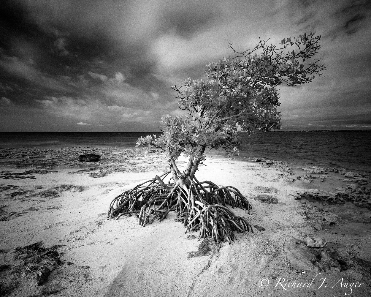 Unnamed Island 1, Florida Keys. Mamiya 7ii, 43mm f/4.5, f/22. Ilford SFX200, DDX. B+W 092 Infrared Filter.  Photo by Richard Auger.