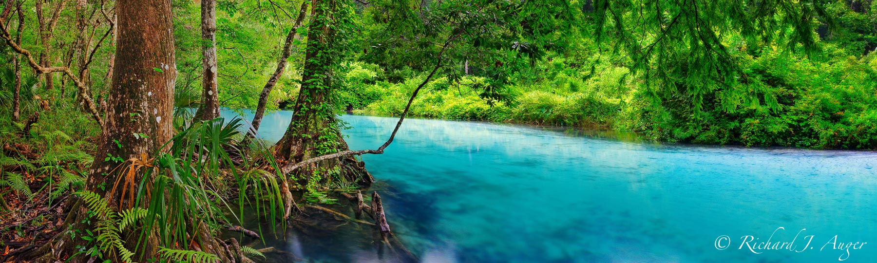 Weeki Wachee, Spring, River, Florida, water, cypress, photograph, canvas, photographer, Richard Auger