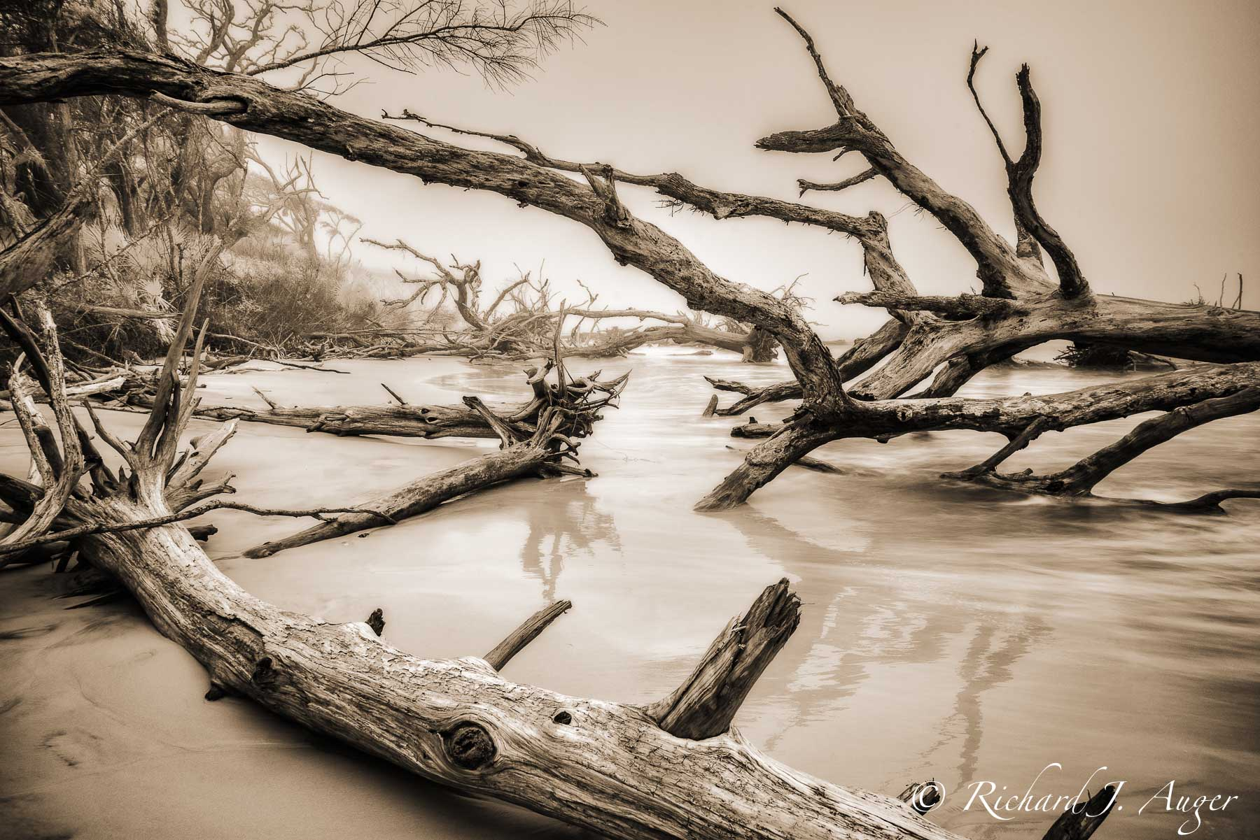 Big Talbot Island State Park, Florida, Driftwood, Long Exposure, Fog, Landscape, Photograph, Sepia, Infrared