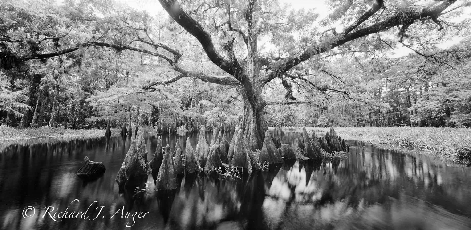 Fisheating Creek: Highlands and Glades County, Florida