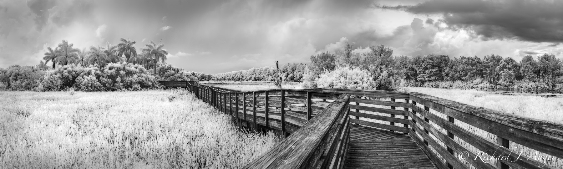 green cay wetlands, Palm beach County, Florida, boardwalk, swamp, black and white